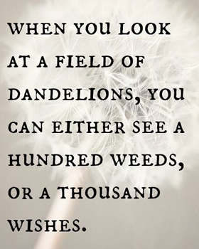 dandelion message